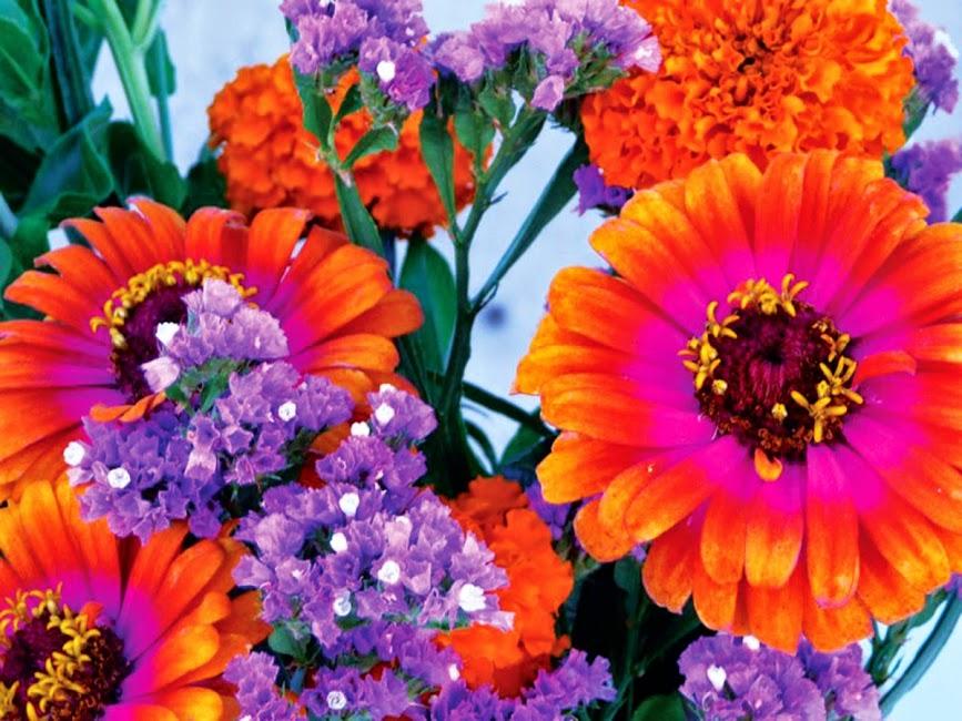 300_CMYK_flowers